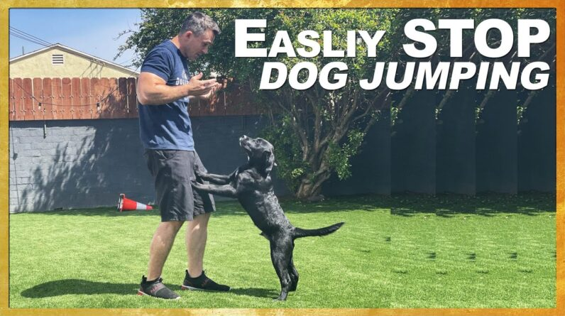 Easily and Quickly Teach Your Dog NOT to Jump on People