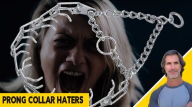 Prong Collar Haters and Why Are Prong Collars an Important Training Tool for Some Dogs