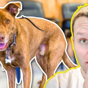 FEARFUL DOG BITES HER BOYFRIEND IN THE FACE!