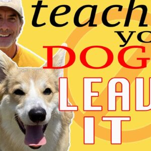 How to Teach ANY DOG to LEAVE IT in 5 Minutes - Dog Training Tips
