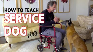 How to Teach Service Dog Skills to Your Dog