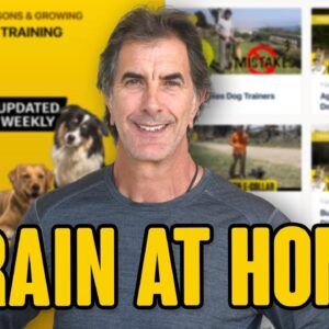 Online Dog Training - Train Your Dog at Home