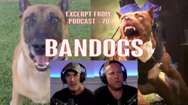 Protection Dogs Ban Dogs and Shepherds with Eric Shearer
