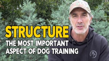 Structure The Most IMPORTANT Aspect of Dog Training