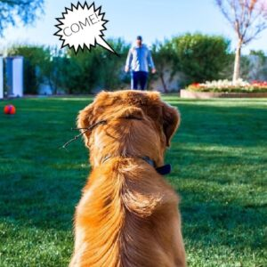 TEACH ANY DOG RELIABLE OFF LEASH RECALL WITH THS!