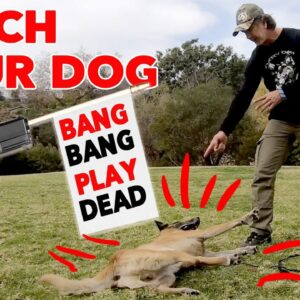 Teach Your Dog to Play Dead - Trick Dog Training