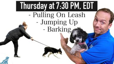 The 3 Dog Training Steps To STOP These Frustrating Behaviors!