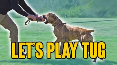 The BEST way to PLAY TUG with Your Dog