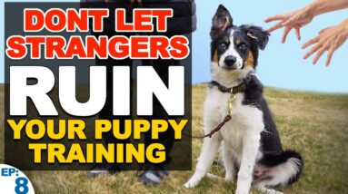 The Dog Training Plan For When People Ask To Pet Your Pup