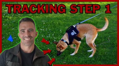 The First Step to Teach Your Dog Competitive Tracking