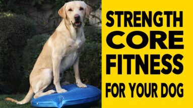 Dog Fitness - Exercises to Get Your Dog Into Great Shape, Strength, Core, Fitness