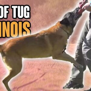 TUG - The Secret to a Happy Obedient Dog - Avoid Common Mistakes