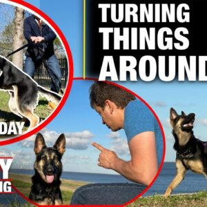 She LOST HER MIND Last Time. Here's What I'm Doing About It. REALITY DOG TRAINING EP 9
