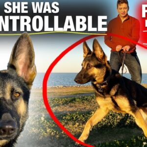 She was UNCONTROLLABLE days ago. How is this possible? Reality Dog Training
