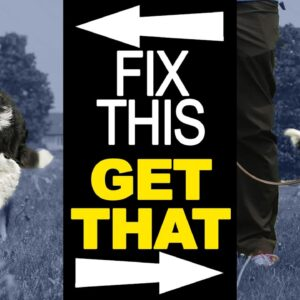 Are You Struggling With Your Dog Training? Fix THIS First!