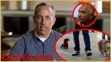 Can Jerry Seinfeld Walk His Overly Excited Dog? Part 2 | Cesar911 Shorts
