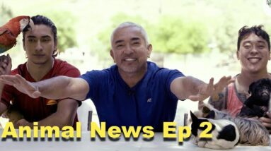 Cesar Millan Ranch News, And News From Around The Animal World!!