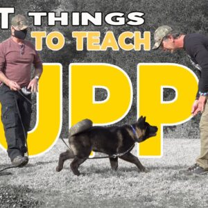 First Things to Teach Your Puppy - COME and DOWN