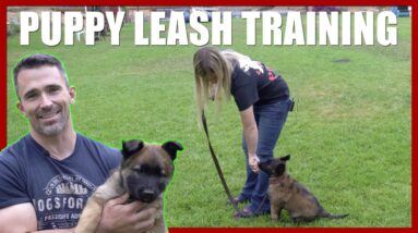 How to Introduce your Puppy to the Leash with Bethany Preud'homme.