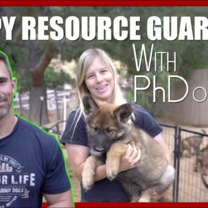 How to Stop Puppy Resource Guarding