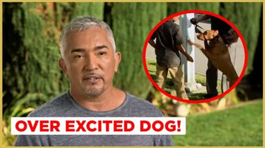 How to walk your OVERLY EXCITED dog! (Cesar911 Shorts)