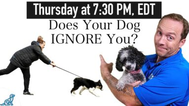 5 Important Dog Training Tips For Teaching Your Dog To Listen EVERYWHERE!