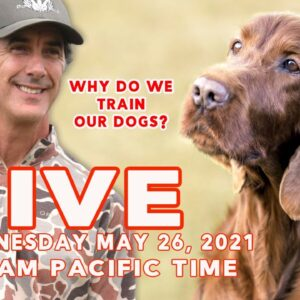 LIVE - Why Do We Train Our Dogs
