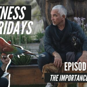The Importance of Focus on Cesar Millan's Fitness Fridays