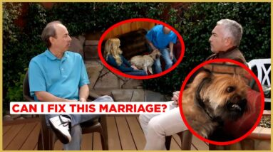 This Dog Is Ruining This Marriage! (Cesar911 Shorts)
