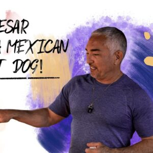Watch me make a Mexican Hot Dog!
