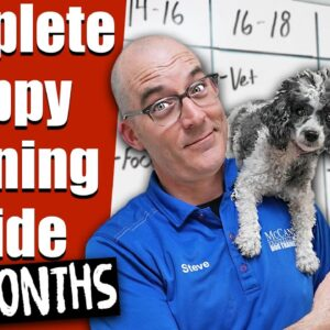 Your Complete Puppy Training Schedule By Age (3-6 Months)