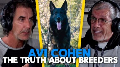 German Shepherd Breeders - The Good the BAD and the UGLY | Avi Cohen EP.80