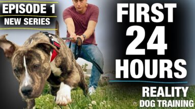 The FIRST 24 HOURS with a TOTALLY UNTRAINED Pit Bull [Reality Dog Training Episode 1]