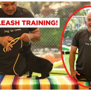 How To Leash Train Your Puppy (Dog Tips)