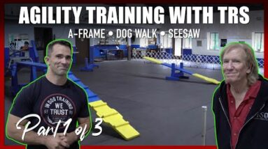 Learn How to Teach Your Dog Agility with The Tom Rose School.