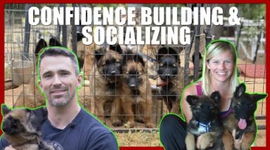 Puppy Confidence Building and Socializing