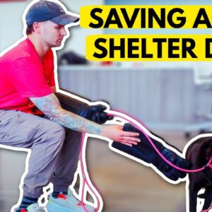 SAVING AS MANY SHELTER DOGS AS I CAN!