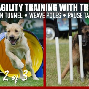 Teach Your Dog the Weave Poles, Pause Table, and Open Tunnel for Agility.