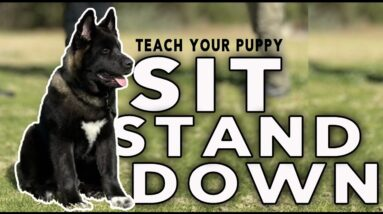 Teach Your PUPPY SIT STAND and DOWN - Puppy Basic Obedience