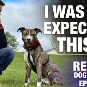 There We Go Baby! That's What I'm Talking About! [Reality Dog Training: George the Pit Bull Ep 4]