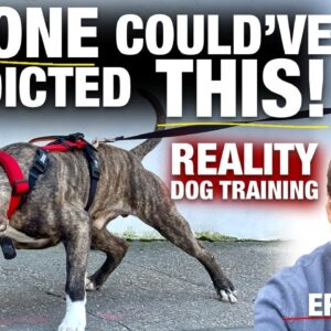 When You Have A Plan VS. What Actually Happens [Reality Dog Training: George the Pit Bull Ep. 5]