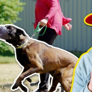 WHY IS THIS DOG SO AGGRESSIVE ON LEASH?!