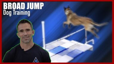 Broad Jump Training for Competitive Dog Obedience
