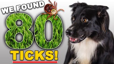 Everything A Dog Owner Needs To Know About Ticks 🤢