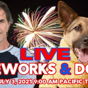 Fireworks and Dogs - How to deal with 4th of July | LIVE Q&A