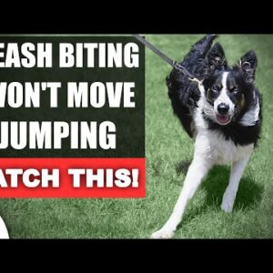 Fix Your Leash Walking Training For THESE Common Problems