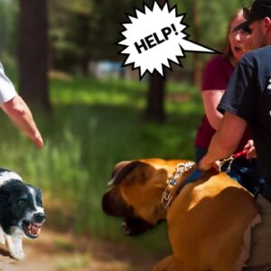 GIANT AGGRESSIVE MASTIFF GOES AFTER EVERYTHING! (I'M HIS LAST CHANCE)