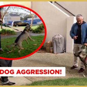 How to Solve Dog Aggression! (Dog Nation)