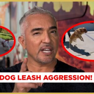 How to Stop Leash Aggression (Dog Nation)