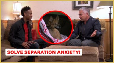 Solving Separation Anxiety (Dog Nation)